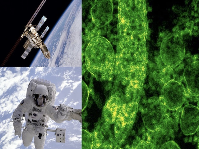 Characteristics of bacteria in the International Space Station.